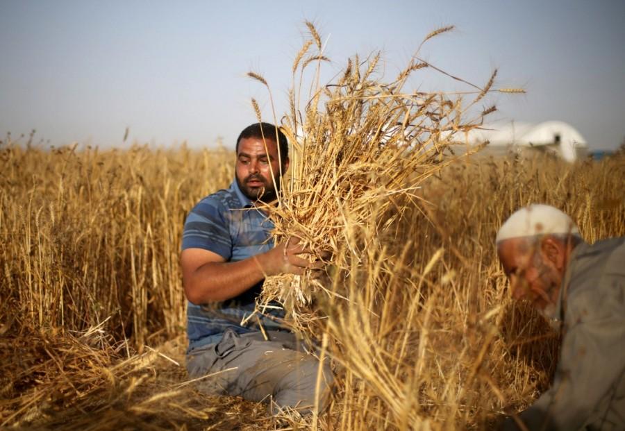 Disabled Palestinian,Palestinian Louy al-Najar,Louy al-Najar,potential employers