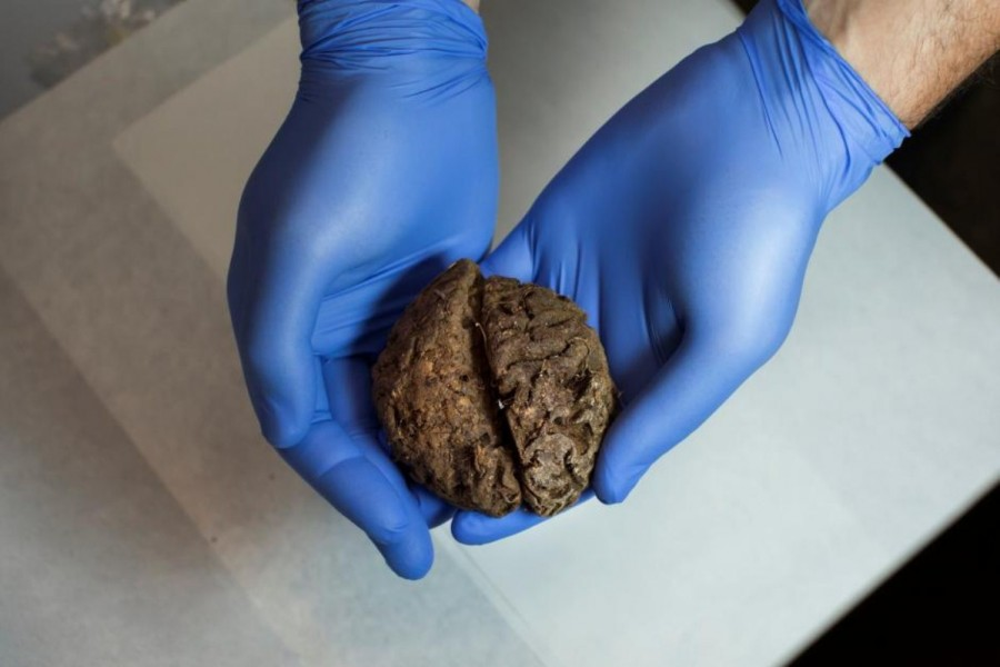 Preserved brains,Spanish grave,Spanish Civil War