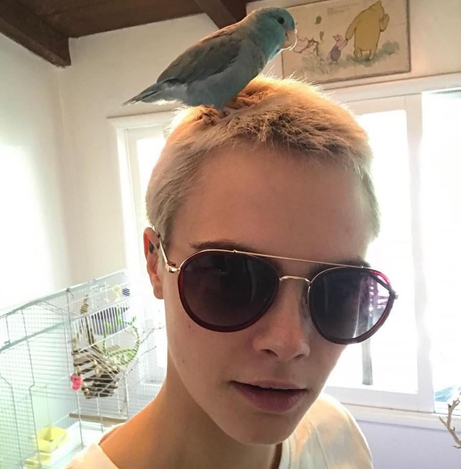 Cara Delevingne,model Cara Delevingne,Cara Delevingne short hair,Cara Delevingne hair