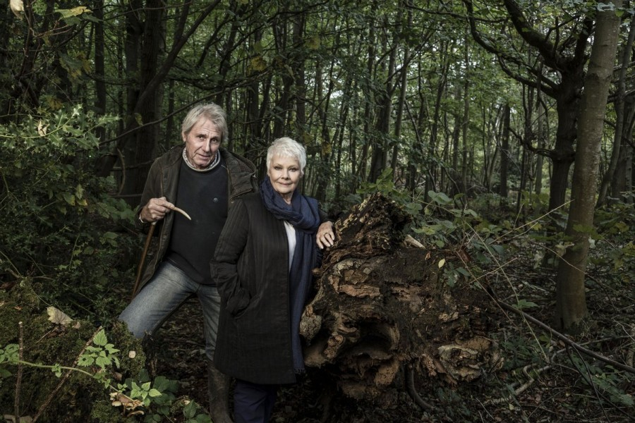 Judi Dench,actress Judi Dench,secret woodland,Judi Dench plants trees