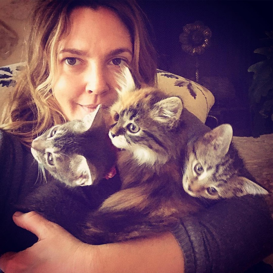 Drew Barrymore,actress Drew Barrymore,Drew Blythe Barrymore,actress Drew Blythe Barrymore,Drew Barrymore with kittens,hot Drew Barrymore,Drew Barrymore Instagram,Drew Barrymore new pics,Drew Barrymorenew images