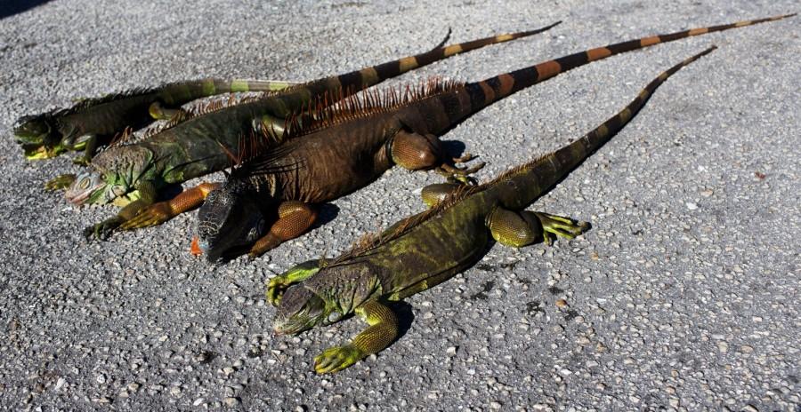 Florida wildlife,Florida,Florida wildlife zoo,cold temperatures