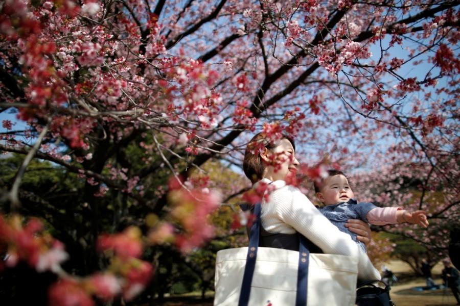 Colorful spring,Spring in blossom,Spring blossom,Spring blossom  pics,Spring blossom around world,springtime