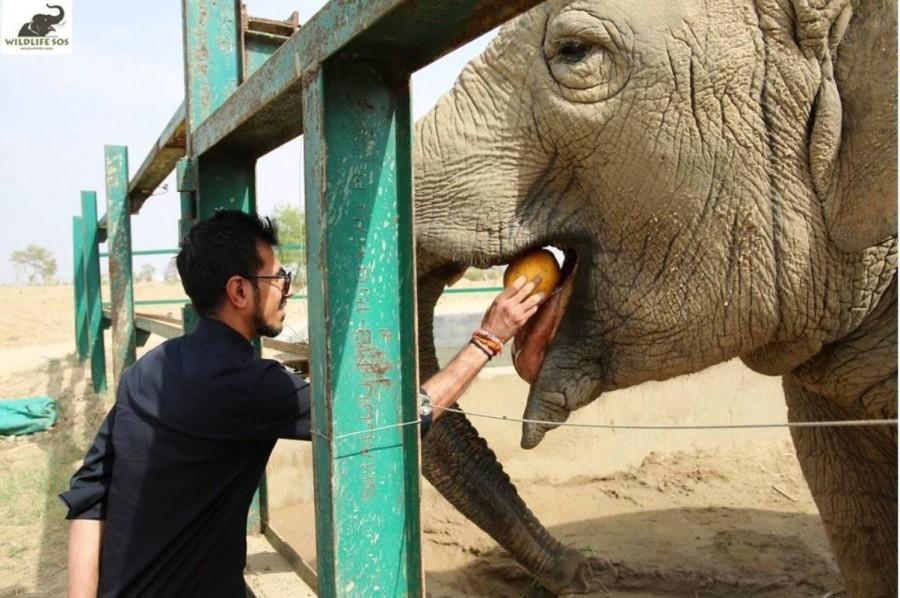 Yuzvendra Chahal,Yuzvendra Chahal visits elephant rescue centre,Yuzvendra Chahal at elephant rescue centre,Yuzvendra Chahal pics,Yuzvendra Chahal images,cricketer Yuzvendra Chahal