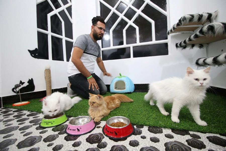 Cat Hotel,Cat Hotel in Iraq,Iraq Cat Hotel,Cat Hotel pics,Cat Hotel images,Ahmed Taher Maki