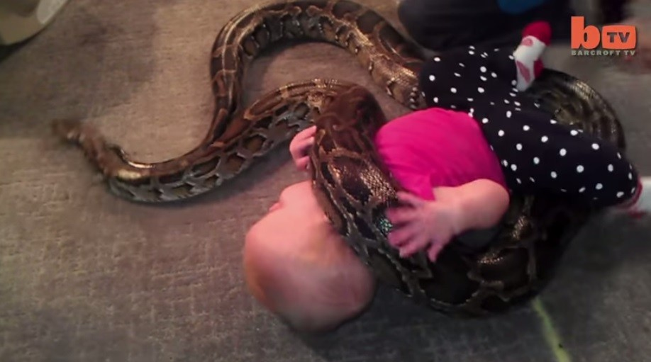 Adorable Toddler Playing with 13-Foot-Long Python Scary Video Goes Viral [PHOTOS VIDEO]