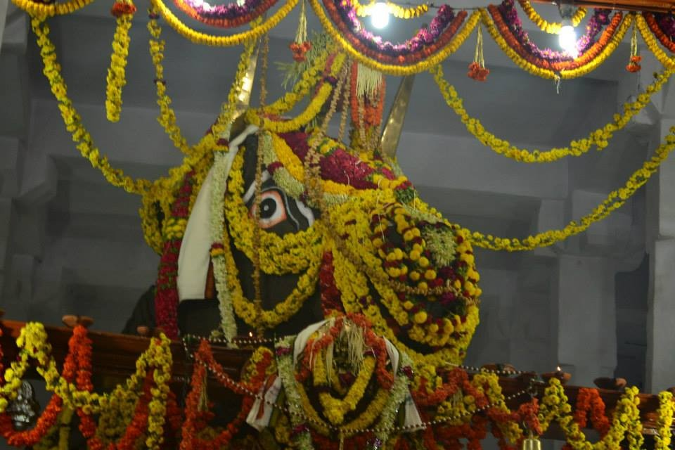 Kadalekai Parishe,Kadalekai Parishe 2015,groundnut festival,Dodda Ganesha temple,Bull Temple,Basavanagudi,Bangalore festival