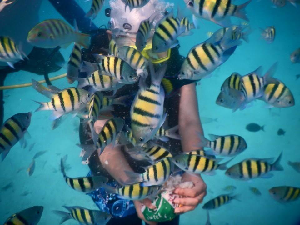 Mia george,mia george scuba diving,mia george photos,scuba diving,scuba diving photos,actors scuba diving,Lakshadweep,Scuba diving spots