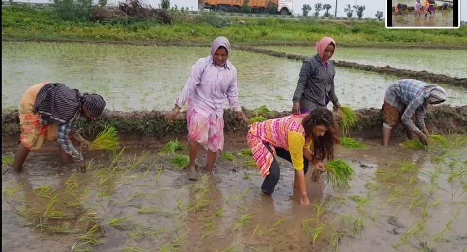 Sri Reddy,actress Sri Reddy,Sri Reddy turns farmer,Sri Reddy pics,Sri Reddy images,Sri Reddy stills,Sri Reddy pictures,Sri Reddy photos
