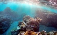 Great barrier reef, environment, global warming,