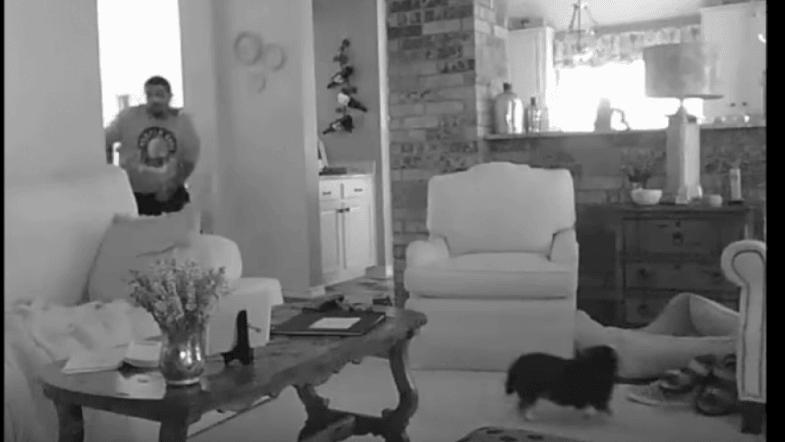 Tiny dog scares off home invader