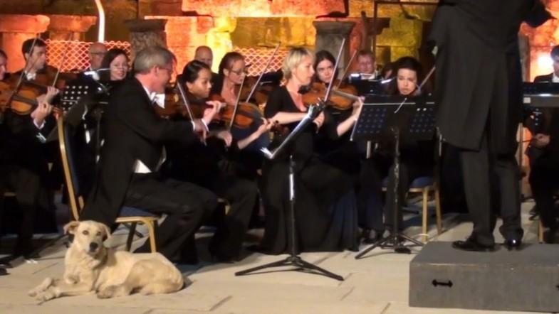 Watch dog nonchalantly gatecrash live orchestra performance