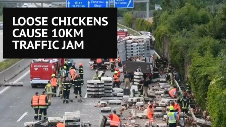Thousands of escaped chickens cause huge traffic jam on Austrian highway