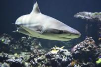 shark, greenland shark, life longevity, health,