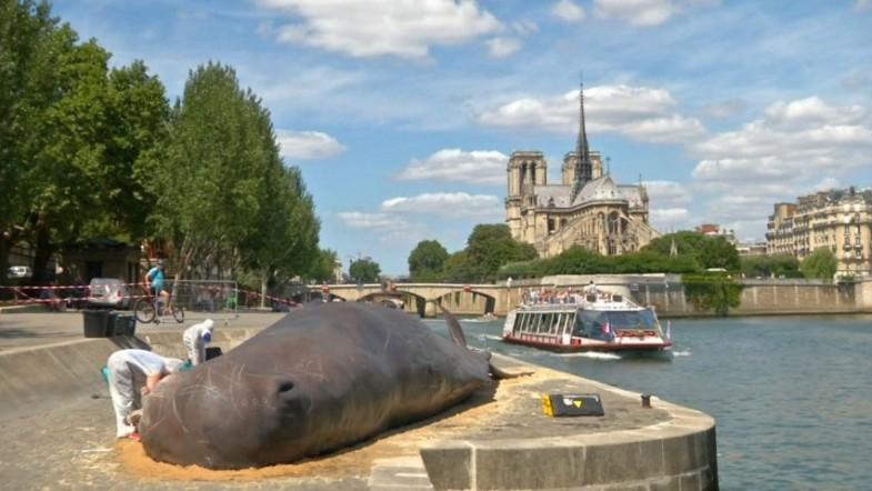 Beached whale causes a stir in Paris