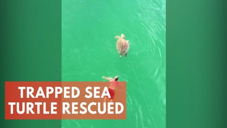 Man rescues turtle after it gets caught in a fishing hook