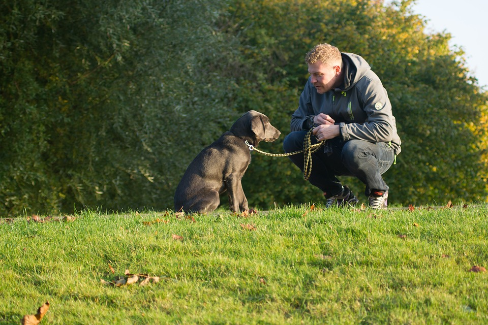 Puppy-cuddling disease: Dozens of dog owners infected with bacteria from hugging their pets