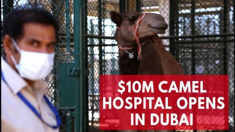 Dubai opens $10m hospital exclusively for camels
