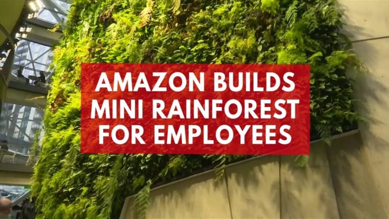 Amazon creates mini rainforest for its employees