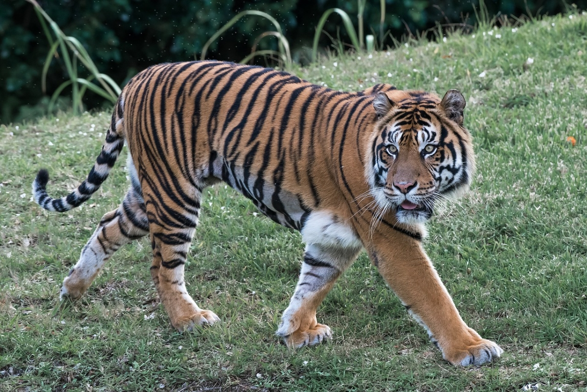 Tigers have wiped out men in these villages of West Bengal ...