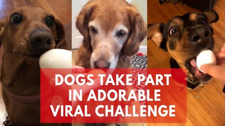 Adorable dogs taking part in #EggChallenge has gone viral for the cutest reasons
