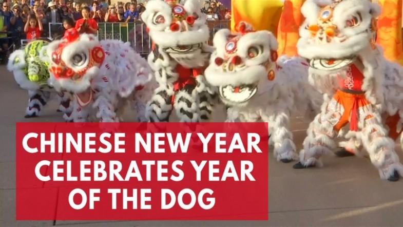 Year of the Dog will be unlucky for Donald Trump, Chinese