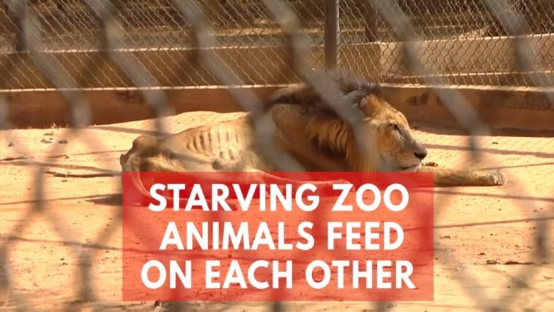 How Venezuelas food crisis is affecting zoo animals