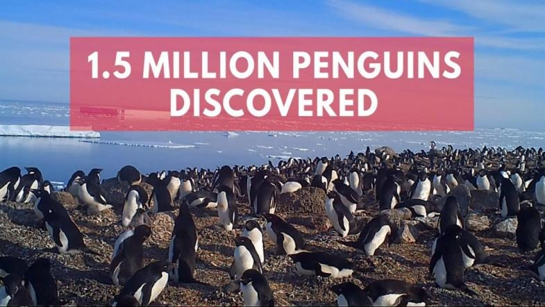 Scientists discover hidden supercolony of 1.5 million penguins
