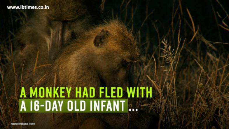 Monkey flees with sleeping 16-day-old boy
