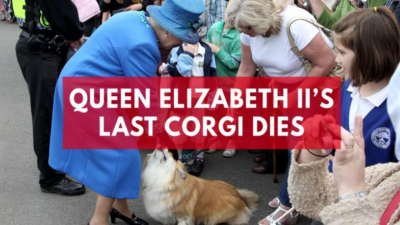 Queen Elizabeth IIs last corgi dies