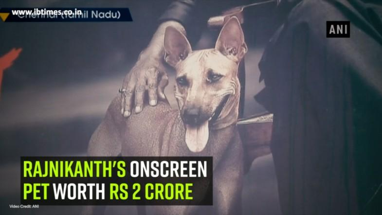 Rajnikanths onscreen pet worth Rs 2 crore