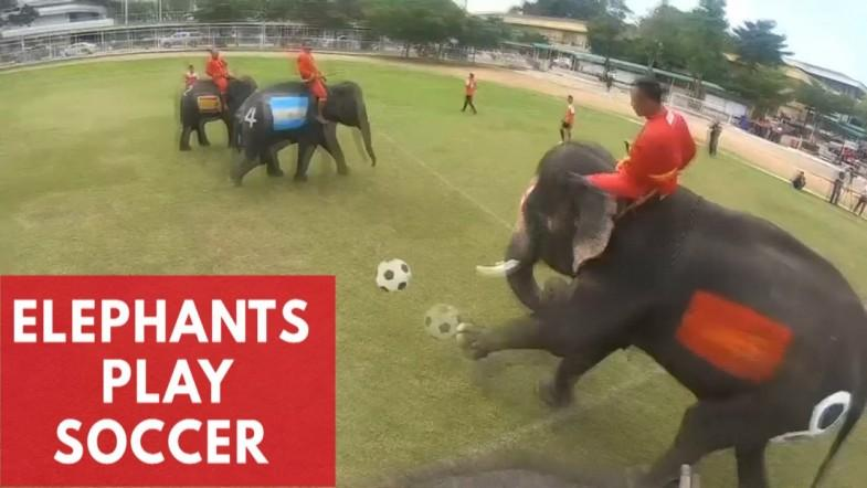 Soccer-Playing Elephants Beat Humans