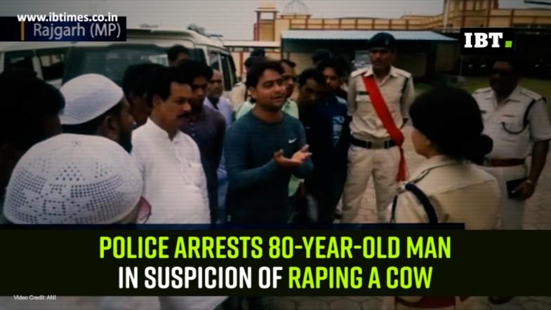 Police arrests 80-year-old man in suspicion of raping a cow