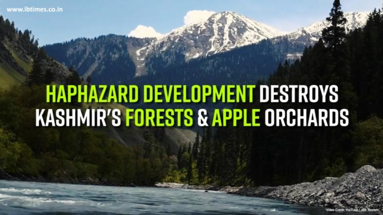 Haphazard development destroys Kashmirs forests and apple orchards