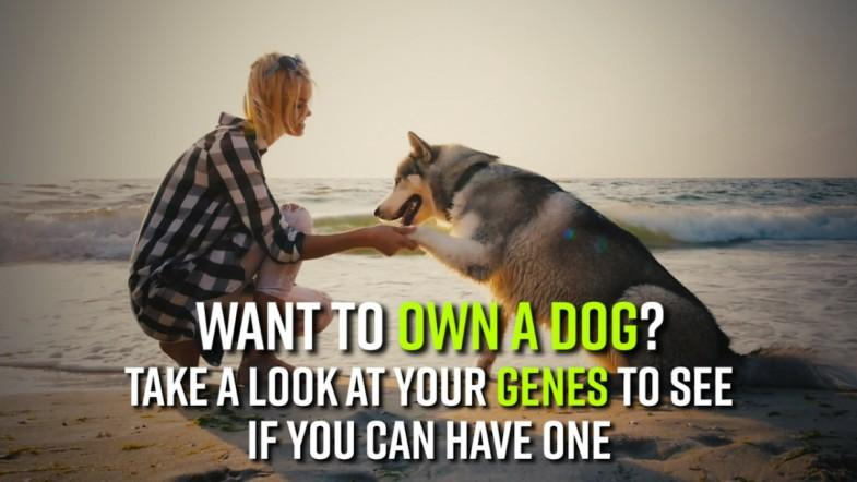 Want to own a dog? It may be in your genes if you will own one or not
