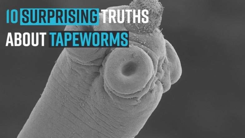 10 Surprising Truths About Tapeworms
