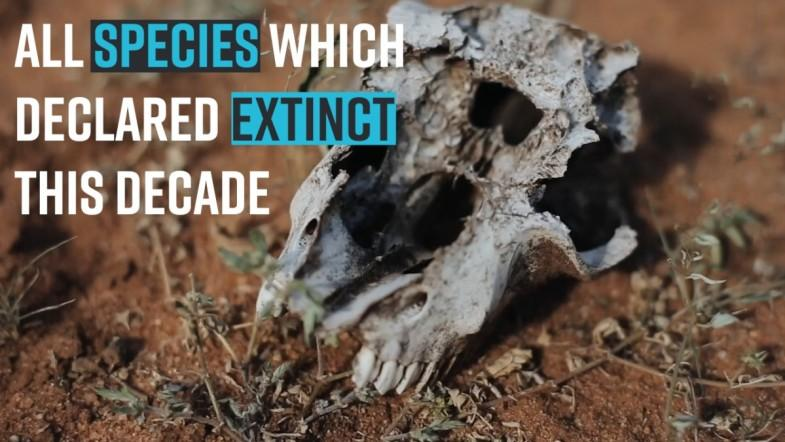 All species which declared extinct this decade