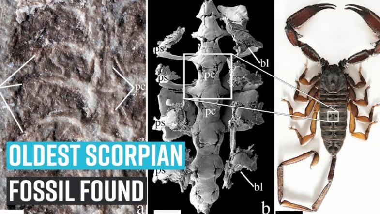Ancient scorpion fossils answered queries