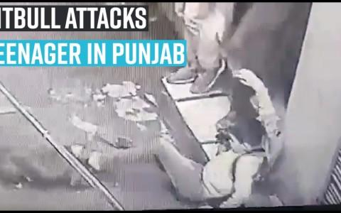 Pet pitbull attacks teenager in Punjab's Jalandhar