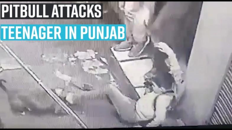 Pet pitbull attacks teenager in Punjabs Jalandhar
