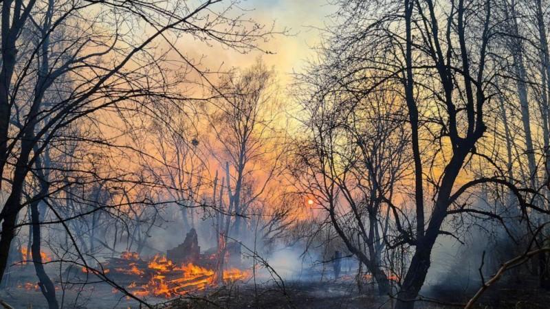Ukraine forest fire