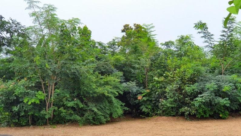 1.5 year old Miyawaki forest---Image courtesy @shubzsharma