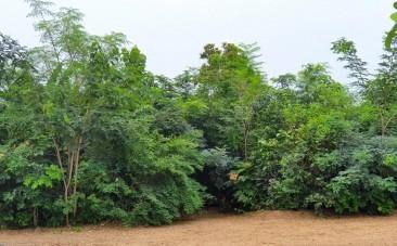 1岁半的Miyawaki森林——图片由@shubzsharma提供