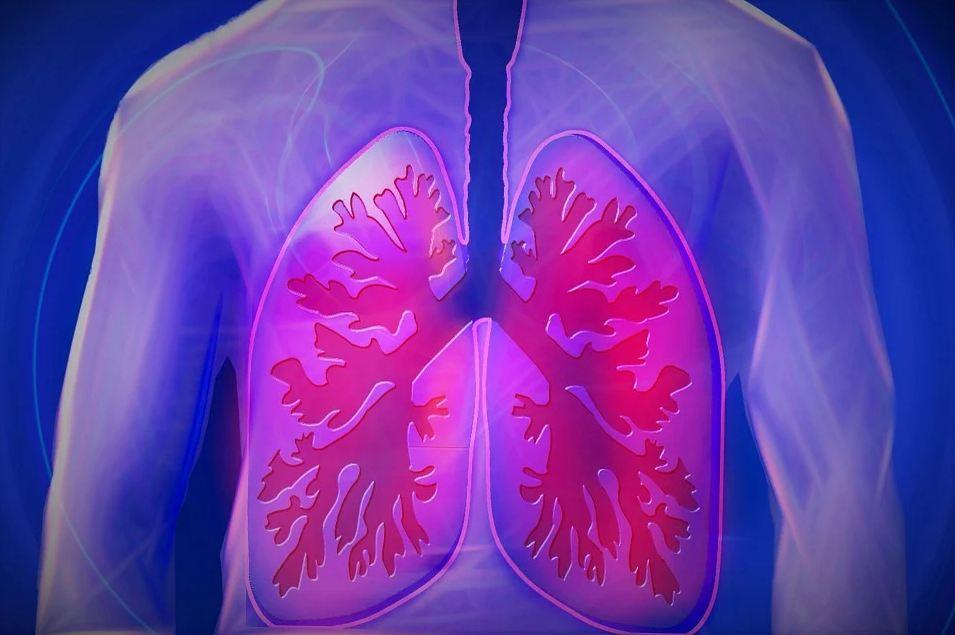 Disease-causing Fungi Present Inside Lungs of Healthy Individuals; should you panic