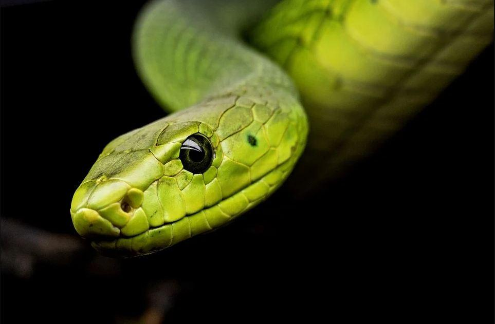 All Modern Snakes Evolved from A Handful of Ancestors Who Survived Dinosaur-Killing Asteroid Impact; Event Served As 'Creative Destruction' [Study]