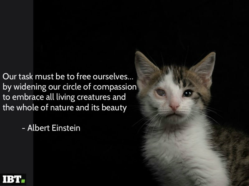World Animal Day 2018 Best Inspirational Quotes Sms Whatsapp Messages Status Greetings And Images To Share Photos Images Gallery 101118