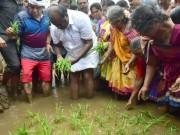 Karnataka CM Kumaraswamy turns farmer, sows paddy seedlings for bumper crop