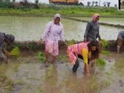Sri Reddy turns farmer, sows paddy seedlings